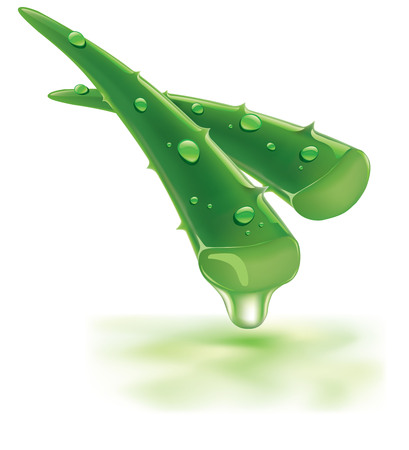 aloe vera with fresh drops of water