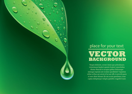 hoja verde de fondo con gotas de agua