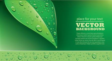 droplets: background green leaf with water droplets Illustration