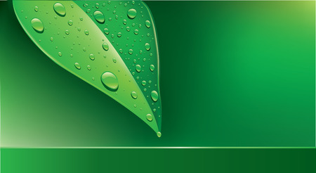 wet: background green leaf with water droplets Illustration
