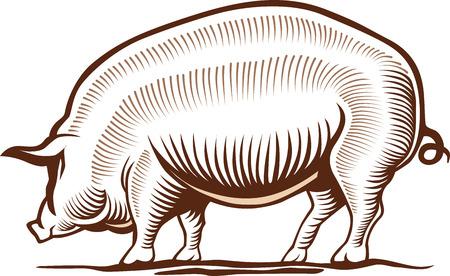 pig, pork, hand drawing