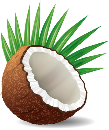sliced fruit: Coconut with palm leaf isolated on a white background Illustration
