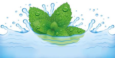 menta: Hojas de menta fresca cae en el agua. Refrescante y saludable Vectores