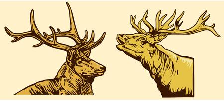 Deer head hand drawing
