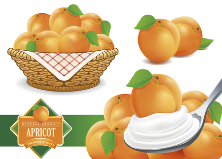 set of different apricot illustrations