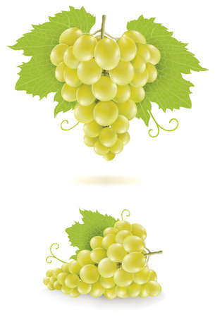 set of various grapes illustration isolated on white