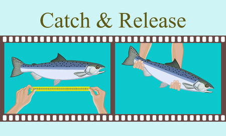 Vector illustration.Measurement of fish caught and release her.