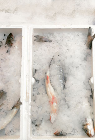 Box of freshly caught fish. Bunch of seabass in a box, on ice. Stock Photo