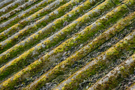Slate roof is covered with green moss.