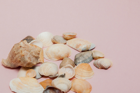 Seashells on pink background with copy space.