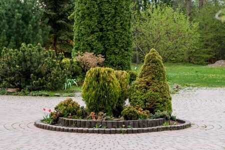 Garden, landscape of geometric shape bush and shrub decorate with colorful flower blooming in green.