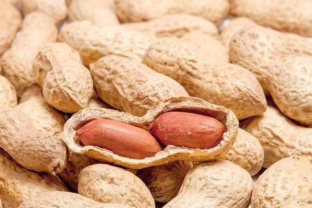 Gros plan de grosses cacahuètes pelées de haricots dans la coquille. Cacahuètes non pelées en coque. Arachides, pour le fond ou la texture. Cultiver des protéines biologiques. Macro.