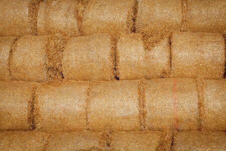 Yellow rolls of straw in the end of summer.