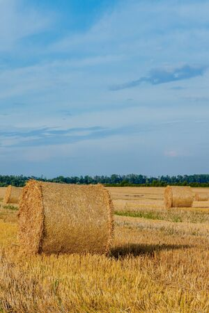 Yellow golden straw bales of hay in the stubble field, agricultural field under a blue sky with clouds. Straw on the meadow. Countryside natural landscape. Grain crop, harvesting 版權商用圖片