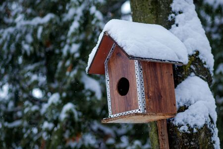 Bird feeder in winter park. Bird house hanging outdoors in winter on tree covered with snow