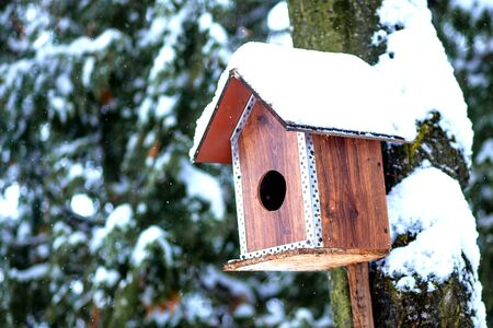 Bird feeder in winter park. Bird house hanging outdoors in winter on tree covered with snow.