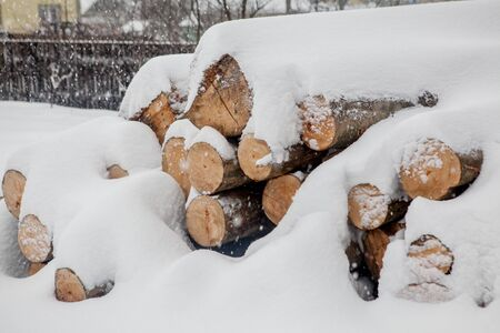 Felled trees under the snow. Raw materials for the woodworking industry. Wood storage in the open air. Timber company. Timber. Roundwood. Round timber.