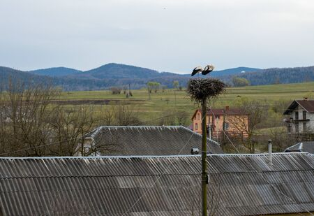 Pair of storks play in their nest above the pole.