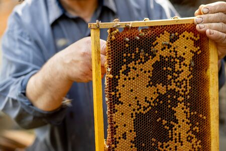 The beekeeper looks after honeycombs. Apiarist shows an empty honeycomb. The beekeeper looks after bees and honeycombs. Empty bee honeycombs.