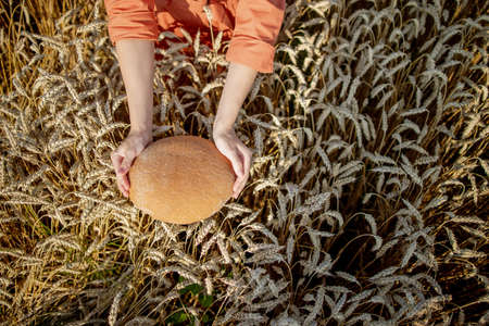 Hands of farmer holding bran bread freshly baked of raw healthy flour with golden wheat ears on background. Agronomist holding a loaf of bread in rural field. Rich harvest, food, agriculture theme