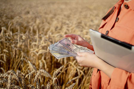 Young farmer holding dollars in golden wheat field. Profit from agriculture during harvesting season in the summer. Archivio Fotografico