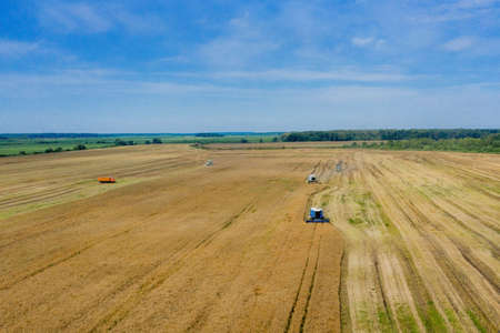 Harvesting of wheat in summer. Two harvesters working in the field. Combine harvester agricultural machine collecting golden ripe wheat on the field. View from above
