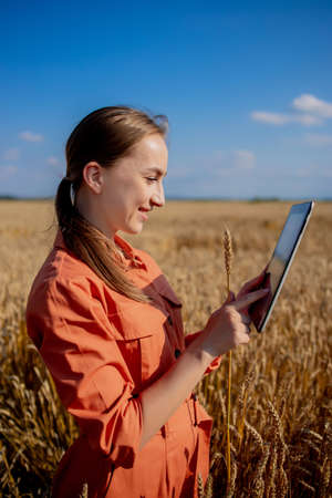 Woman caucasian technologist agronomist with tablet computer in the field of wheat checking quality and growth of crops for agriculture. Agriculture and harvesting concept