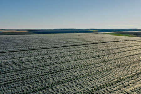 Aerial view of plastic greenhouse on apple orchard. Plant cultivation in organic farming 免版税图像