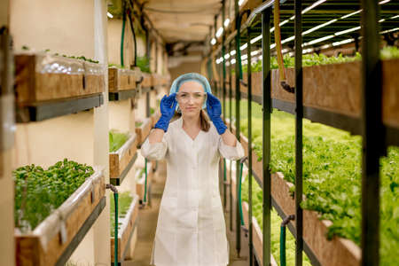Young female engineer checking lettuce in a hydroponic garden