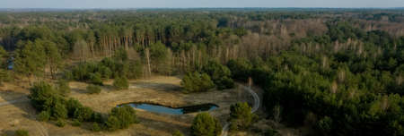 Aerial drone view of deforestation of a pine forest. Ecology concept change tree forest drought and forest refreshing 版權商用圖片
