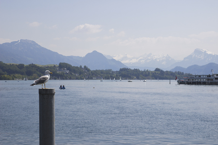 Switzerland. Gull on a mooring pole in the Lake Lucerne with view of the Swiss Alps in the medieval city of Lucerne, in central Switzerland, in the German-speaking portion of the country.