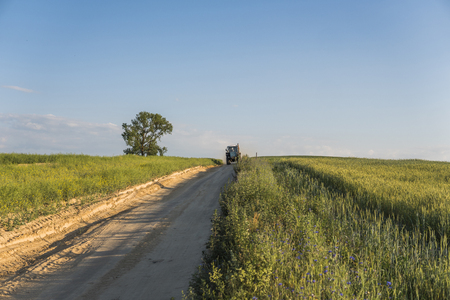 A blue tractor rides along a road in a wheat field. Banque d'images