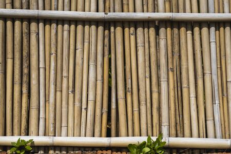 Dry bamboo fence texture or background. Eco natural background concept
