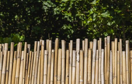 Dry bamboo fence with a green tropical trees on background. Eco natural background concept