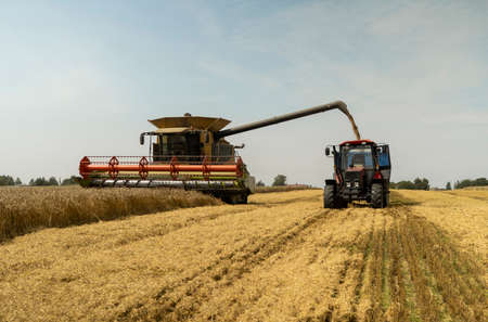 Combine harvester agriculture machine harvesting golden ripe wheat field. Harvester combine harvesting wheat and pouring it into tractor trailer during wheat harvest on sunny summer day