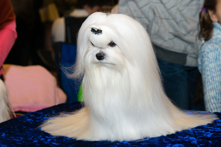 Maltese is on the show.