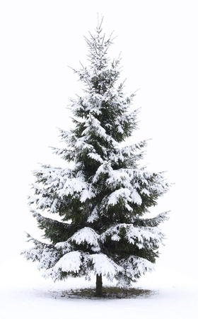 Christmas Tree - Isolated over White background photo