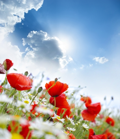 Poppy flower in the sky  Stock Photo - 17907947
