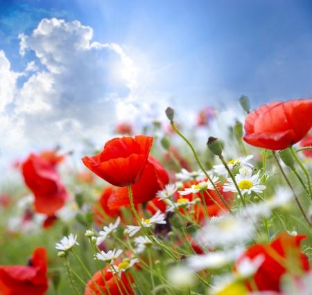 amapola: Amapola flor en el cielo