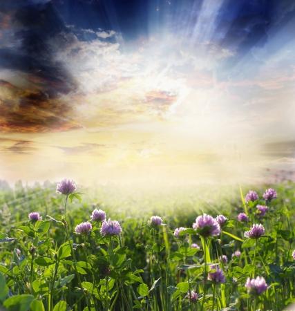 Groene weide onder blauwe hemel met wolken