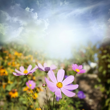 field of flowers and sunlight  photo