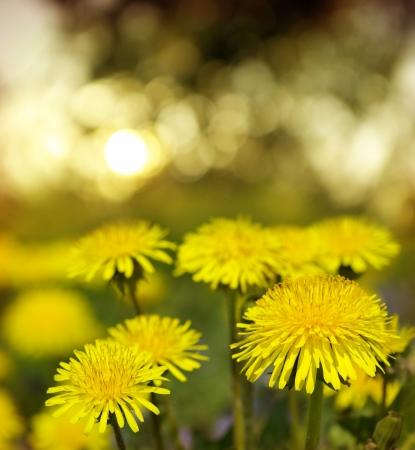 seasonic: Yellow flowers under sky