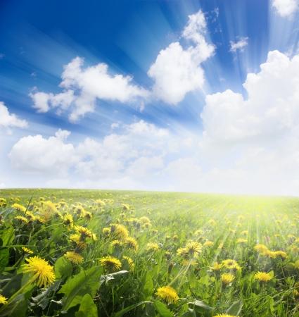 paz mundial: Prado amarillo bajo el cielo azul con nubes