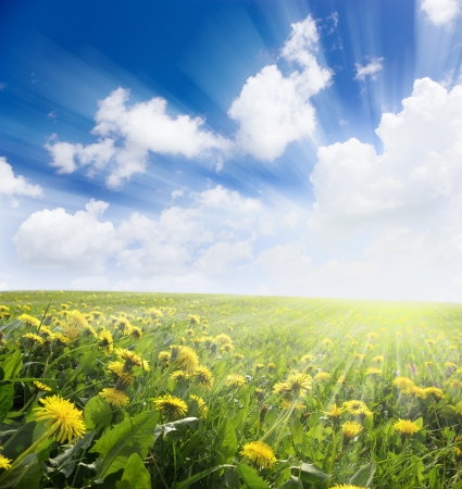 Yellow meadow under blue sky with clouds Stock Photo - 17979825