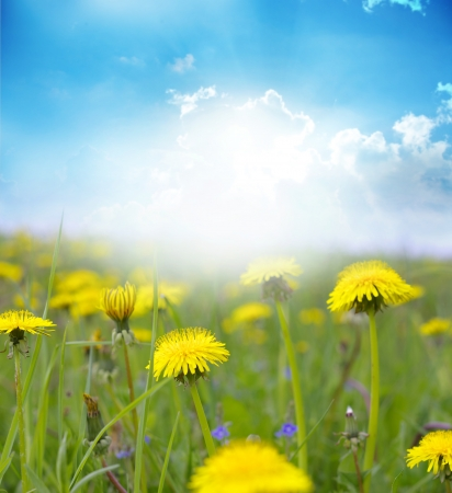 Spring flower field and blue sky. Stock Photo