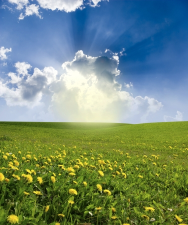 Yellow meadow under blue sky with clouds Stock Photo - 17979982