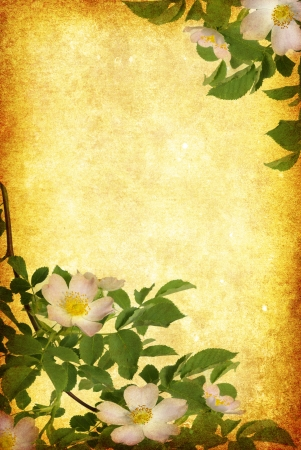 pasted: Photo of a flowers pasted on a grunge background