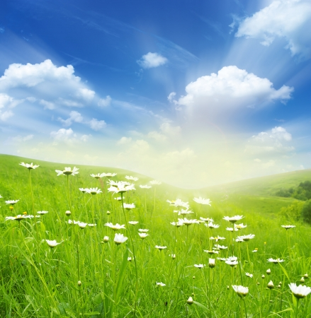 meadow: Field of daisies, blue sky and sun.