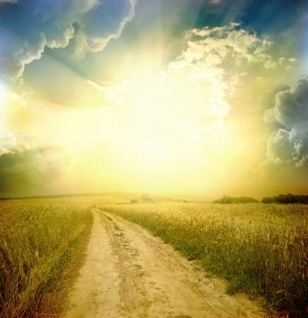 Landelijke weg door het veld