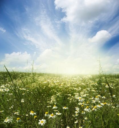 seasonic: Beautiful summer landscape with daisies  Stock Photo